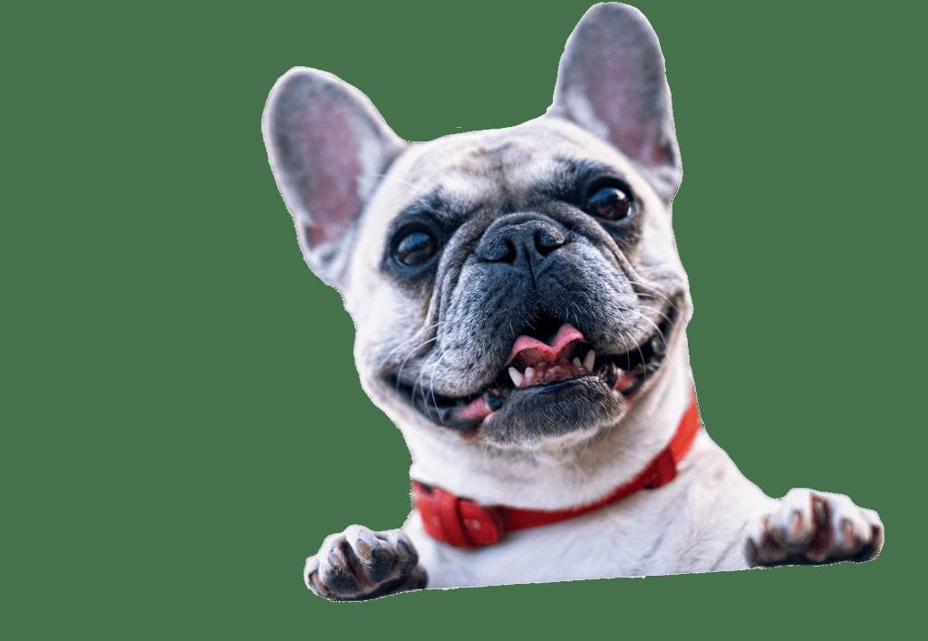 Hund til nyhedsbrev